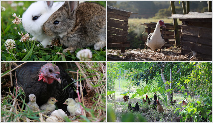 permaculture-action-small-animals-2