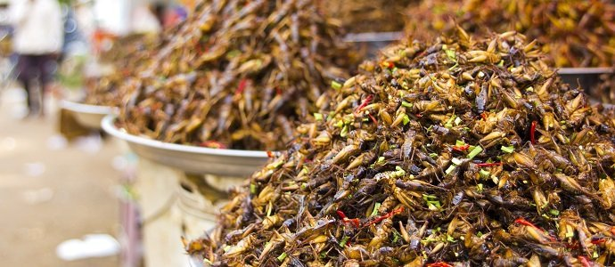 Photo of Are Bugs More Nutritious Than Meat?