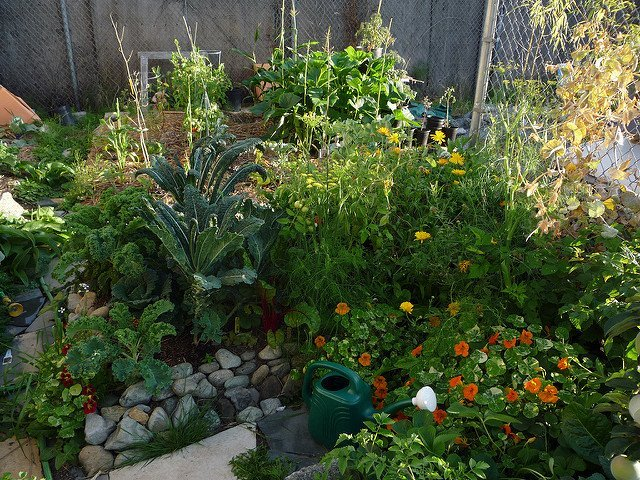 Garden (Courtesy of Keith Rowley)