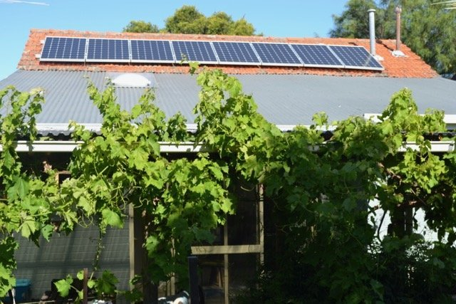 Our small 2kw solar array. We produce almost twice as much electricity as we use. Underlined by a grape vine.