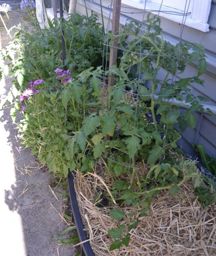 Don't forget 'marginal' space down the side of the house. Grow food.