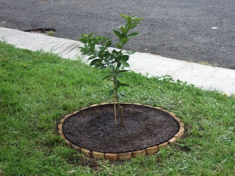 Talk to your neighbours and see if they are happy for you to plant a fruit tree on their nature strip. My cul-de-sac now has about ten fruit trees. Nobody saw me do it. You can't prove anything.