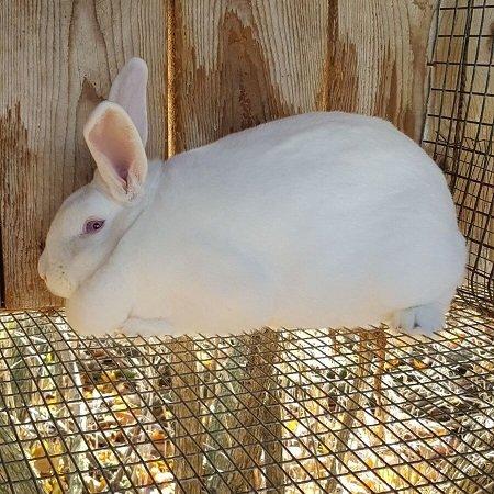 Raising Rabbits 01