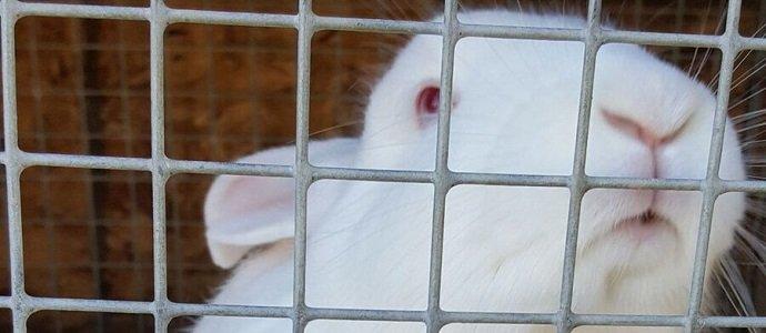 Raising Rabbits Feat1