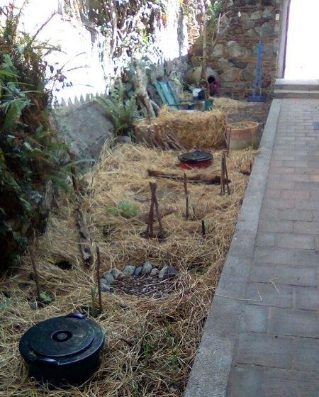 The new reimagined garden outside our door. Photo Credit: Jonathon Engels