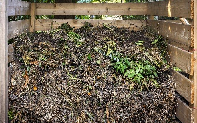 Yard waste in compost bin