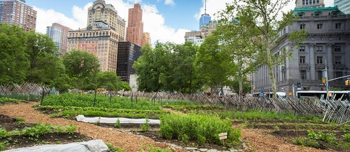 Photo of Urban Agriculture and Food Sovereignty
