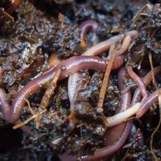 Worms Feat