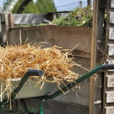 Compost bin and wheelbarrow