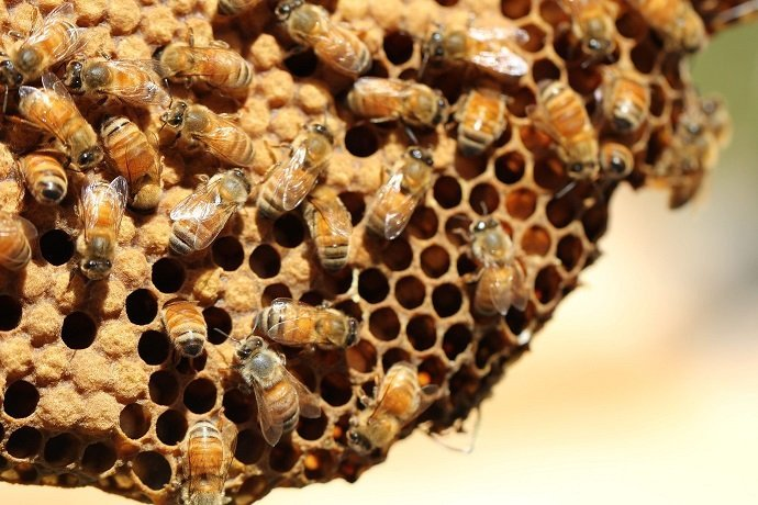 Integrating Beekeeping with Permaculture 01