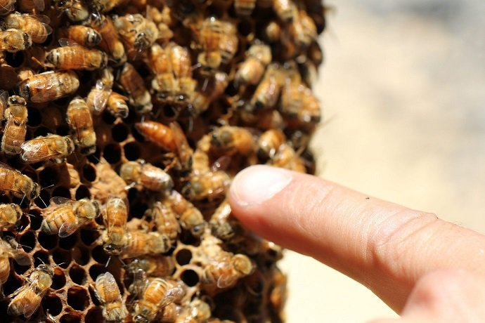 Integrating Beekeeping with Permaculture 05