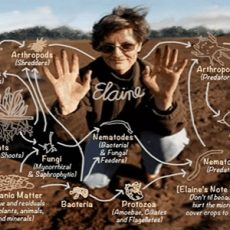 Soil Foodweb feat