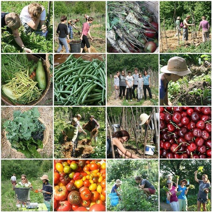 The Polyculture Market Garden Study 01