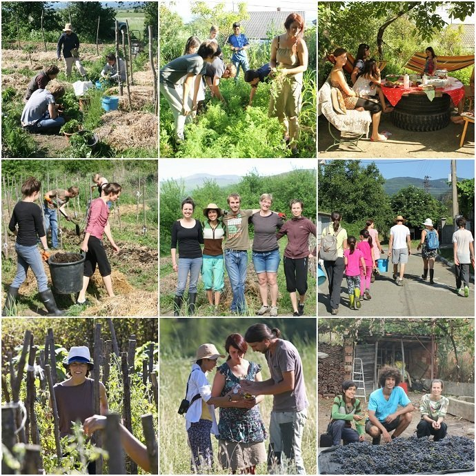 Polyculture Market Garden Study Crew 2016
