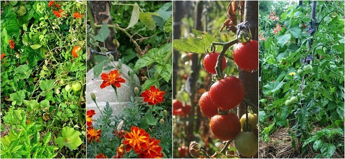 Photos from Zeno Polyculture