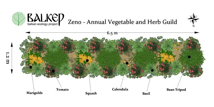 Zeno - Vegetable and herb polyculture/guild 6.5 m section of  planting scheme