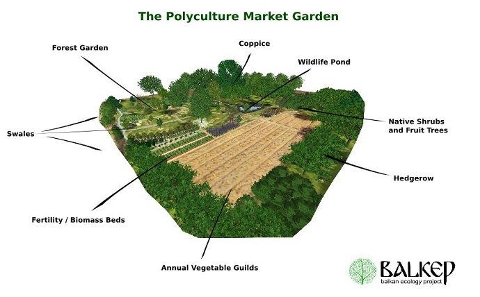 The Polyculture Market Garden Study 32