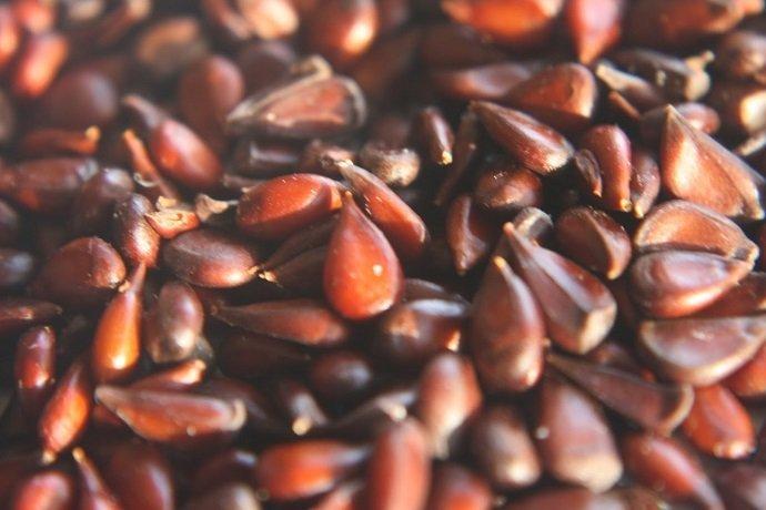 Chaenomeles speciosa seed