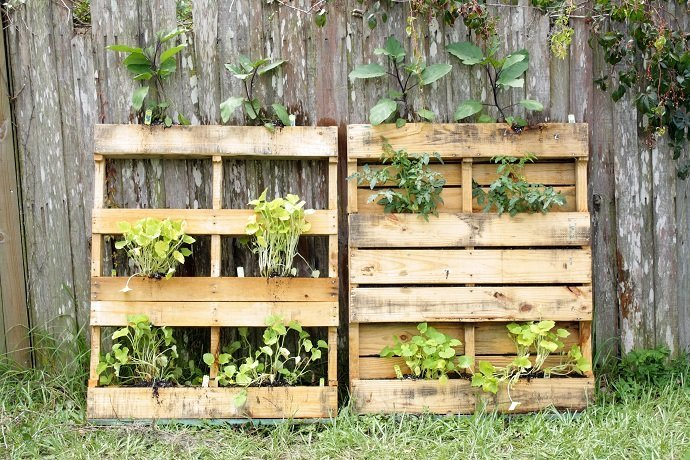 Pallet Vegetable Garden (1)
