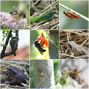 Some of the resident wildlife from our permaculture market garden.