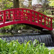 Cranbrook Garden (Barbara Eckstein)