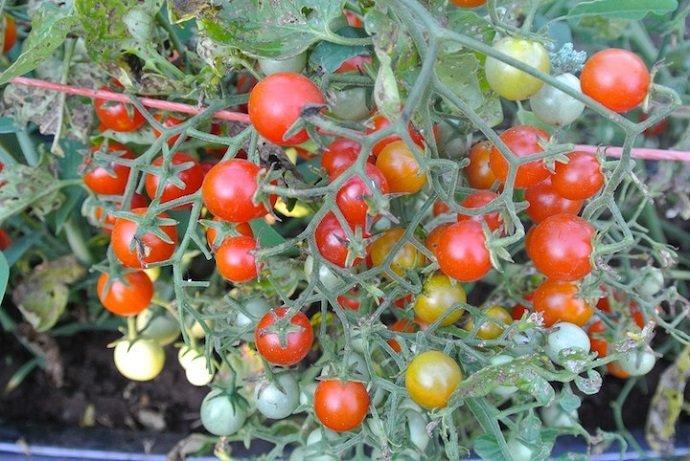 Photo Courtesy of www.adaptiveseeds.com