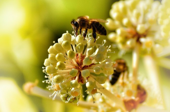 Degraded Land Impacts The Metabolism Of Local Bees 01