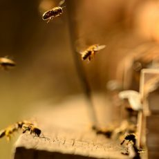 Bee´s in front of a stock