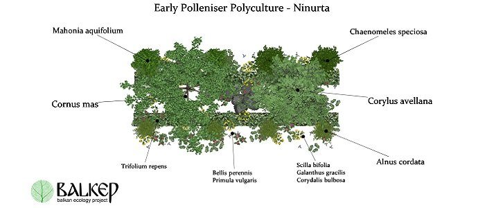 The Early Polleniser Polyculture - A Support Polyculture for ...