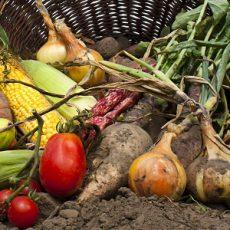 Organic Farming in France Feat
