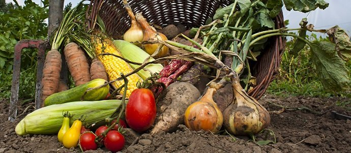 Photo of Organic Farming in France