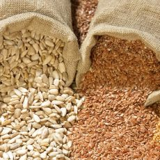 Seed Banking and its Benefits Feat