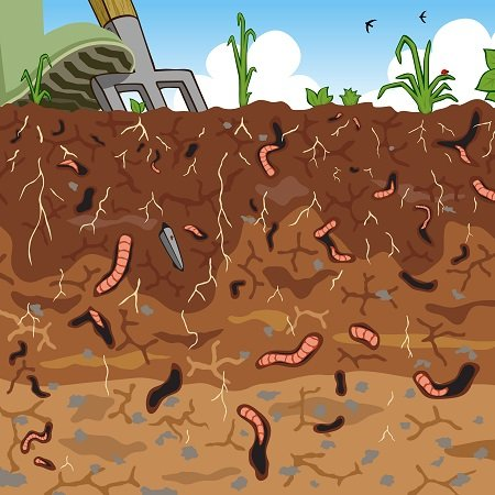 Soil conditions you need to consider when choosing a for Where can you find soil