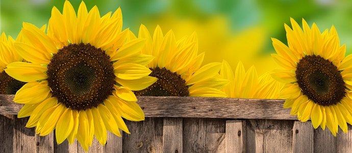 Grow a Little Sunshine in Your Garden feat.