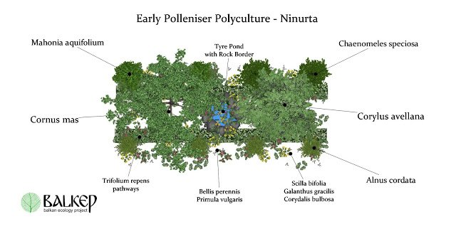 The Early Polleniser Polyculture