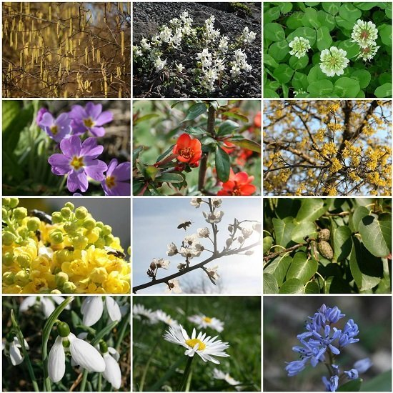 Early Polleniser Guild species in flower