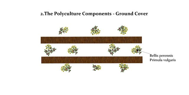 Planting scheme for ground cover is mixed patches of the species between the shrubs and trees