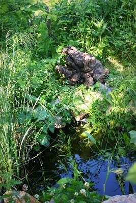 Tyre pond and log from our Market Garden