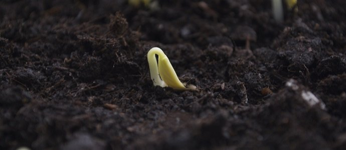 Photo of Quick and Simple Tips for Germinating Seeds Yourself