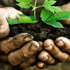 """Earthing"" and Permaculture: Potent Health Benefits for the ""Dirt Farmer"" feat"