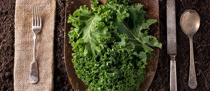 All Hail Kale! Feat