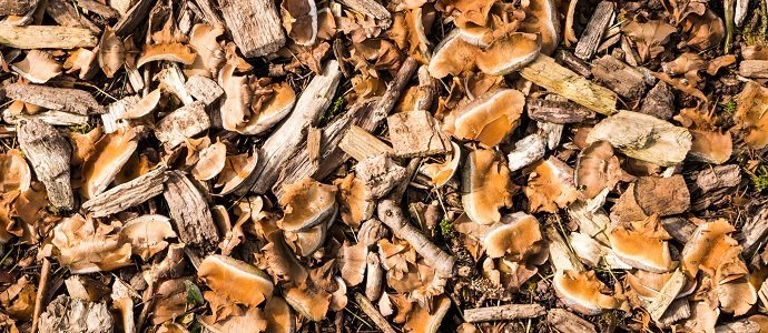 Natural mulch Gardening with Woodchips