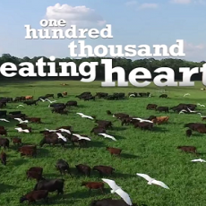 One Hundred Thousand Beating Hearts feat