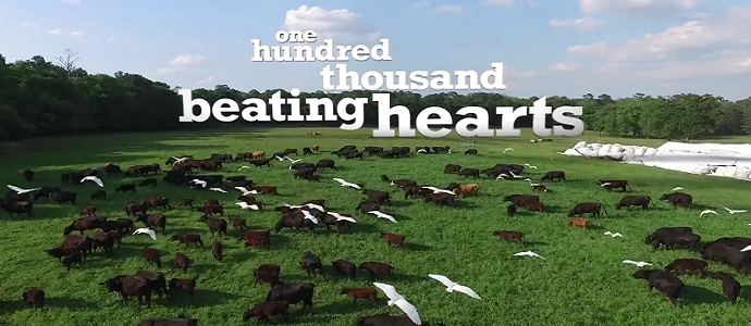 Photo of One Hundred Thousand Beating Hearts – An Evolution From Industrial To Regenerative Farming