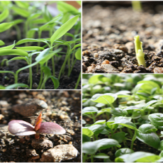 Seedlings_Balkan_Ecology_Project