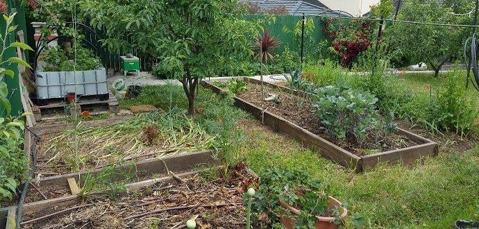 Figure 3 - My soil veg garden gives me lots of vegetables