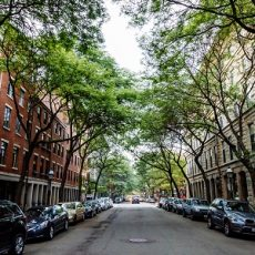 Tree lined street in the North End, Boston, Massachusetts.