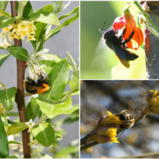 Trees_for_bees_balkan_ecology_project