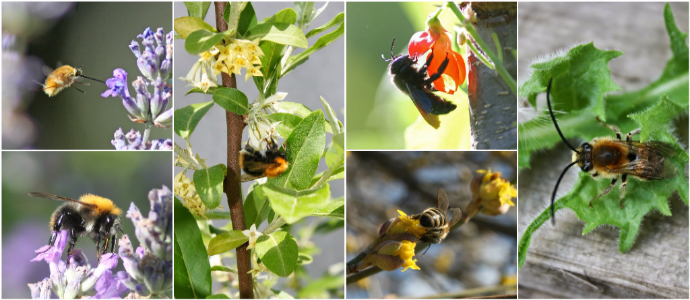 Photo of Trees for Bees