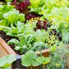 Confessions of a Community Garden Coordinator feat